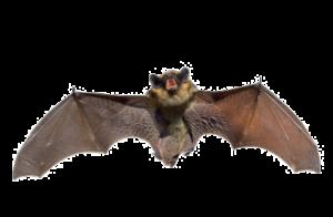 Bat control Canton MI