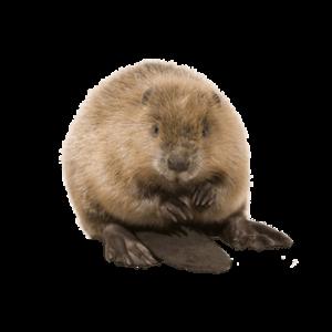 Beaver Control Livonia MI