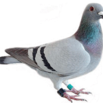 Bird Removal Canton MI