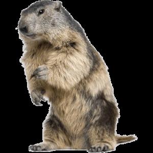Groundhog Removal Livonia MI