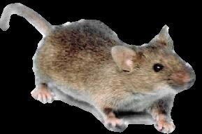 Livonia MI Mice Control