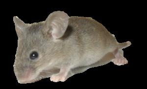 Mice Control Plymouth MI