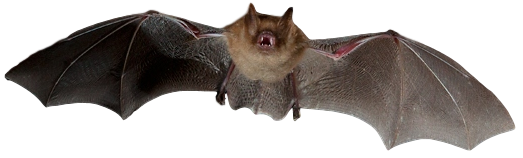 Michigan Bat Eviction Services