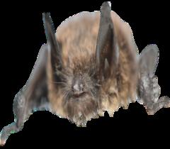 bat-extermination