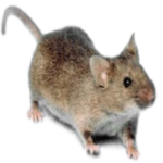 Poisonless mice removal